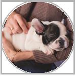 pet shops mailing lists