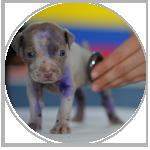 veterinarians mailing lists